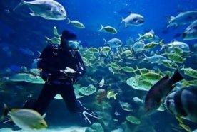 paraty-scuba-diving-excursions-classes-buceo-parati-mergulho-aulas-e-excursoes-7-2-3c